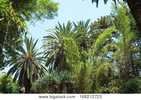 Tropical Garden Jardins Exotiques in Sale, Morocco, Africa