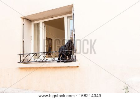 Black spaniel dog on window ledge in exterior wall
