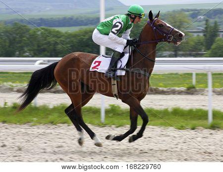 Horse race for the prize of Bolshoi Vesenni in Pyatigorsk,Northern Caucasus, Russia.