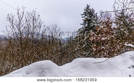 Winter landscape and trees covered with snow. Moravian landscape Boskovice.