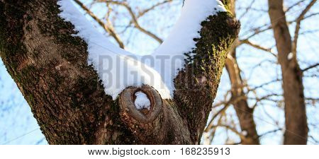 Tree trunk close up covered with snow