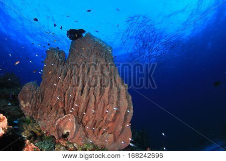 Barrel Sponge coral and fish in ocean