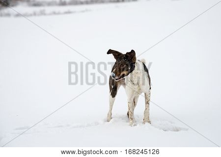 Happy Dog Is Playing In The Snow