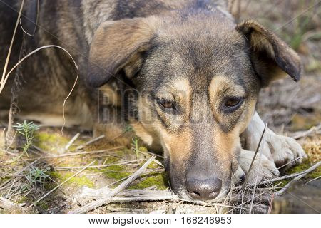 Stray dog in the woods. She lost her master and misses him