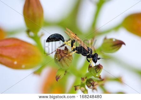 Hornet in a plant, nature, close-up, Europe