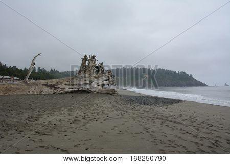 Discarded tree on the beach of La Push, Washington USA