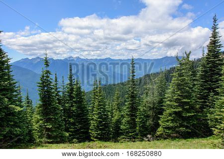 Forest in the mountains, Olympic National Park, Washington, USA