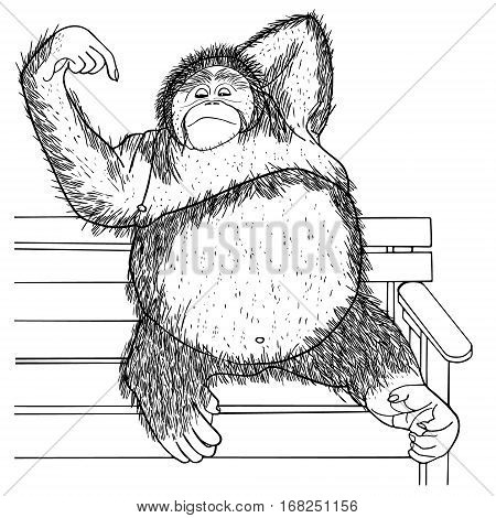 Orangutan Hand drawn sketched vector illustration. Doodle graphic with ornate pattern.