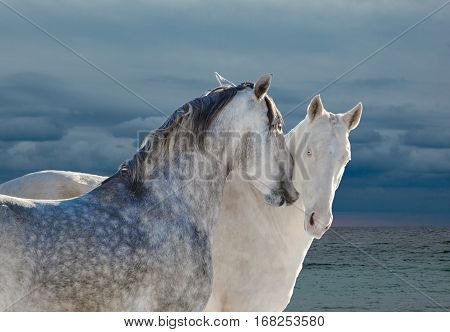 Two light gray horses on sea background