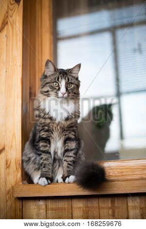 cat sits on the windowsill. Cat sitting on the home window in sunny day. Cat relaxing on windowsill.