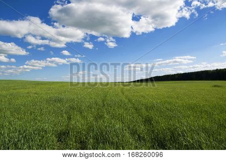 Field of grass and sky in the summer
