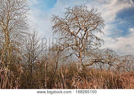 Po Delta Park Ravenna, Emilia Romagna, Italy: landscape with bare tree in winter morning