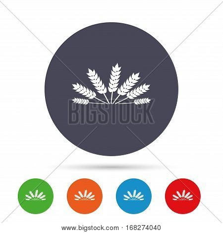 Agricultural sign icon. Wheat corn. Gluten free or No gluten symbol. Round colourful buttons with flat icons. Vector