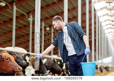 agriculture industry, farming, people and animal husbandry concept - young man or farmer with bucket of hay feeding cows in cowshed on dairy farm