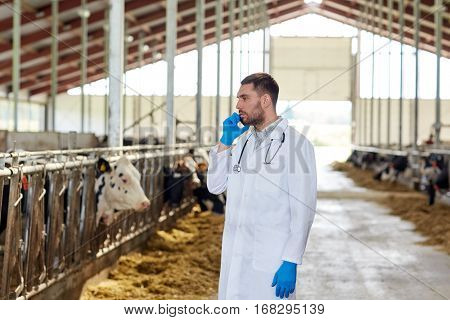 agriculture industry, farming, people and animal husbandry concept - veterinarian or doctor calling on smartphone with cows in cowshed on dairy farm