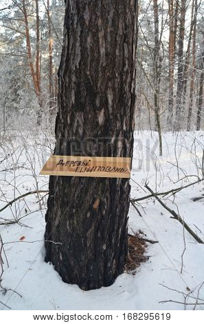 Translation of the inscription on the sign from Russian -.Trees studded. Warning for lumbers. Peoples protection of nature from marauding and export wood in Europe. Ukraine