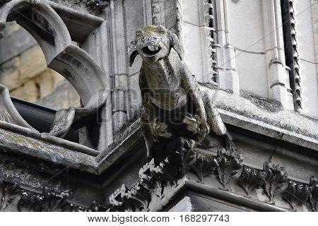 Mantes la Jolie; France - october 18 2016 : gargoyle of the gothic collegiate church
