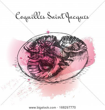 Coquilles Saint Jacques watercolor effect illustration. Vector illustration of French cuisine.