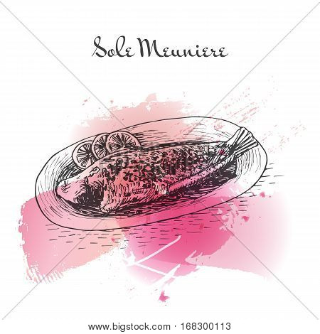 Sole Meuniere watercolor effect illustration. Vector illustration of French cuisine.