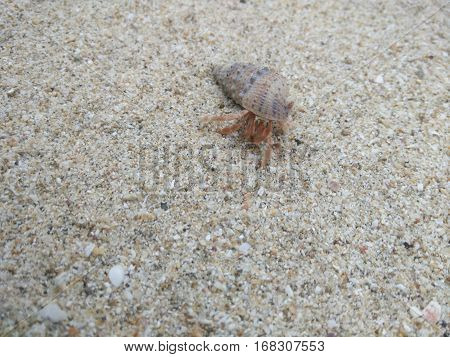 The Snail walk around on the white sands
