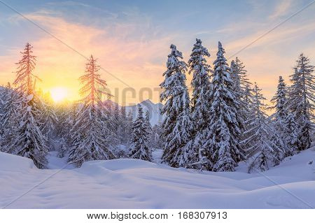 Trees covered with hoarfrost and snow in julian alps mountains-Slovenia.