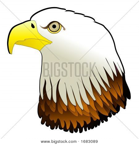 Bald Eagle Powerful Bird Of Prey