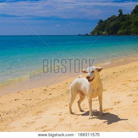 Salty Sea Dog On a Beach