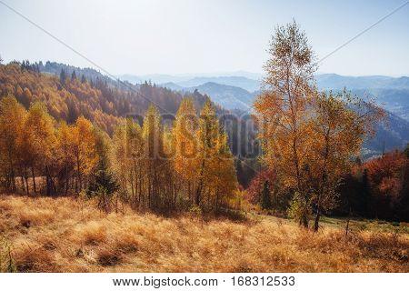 beautiful autumn mountain time in the Carpathian Mountains,
