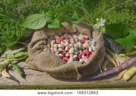Dry Beans In Burlap Sack