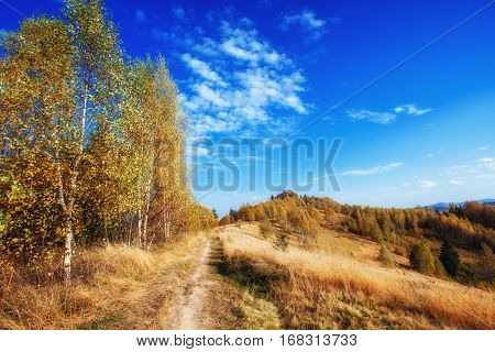 dirt road in the autumn park beautiful yellow tree