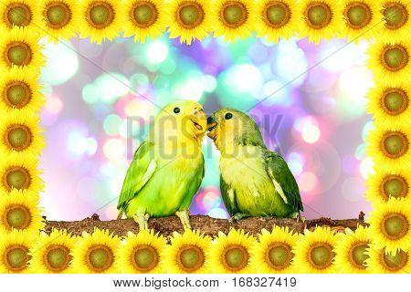 Lovebird on sunflower frame with blurry light