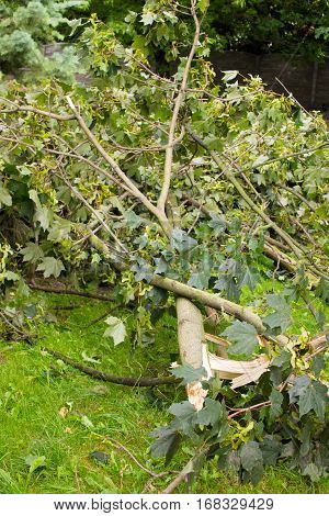 Damaged Tree After Storm In Park