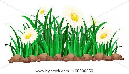 White calendula in garden illustration