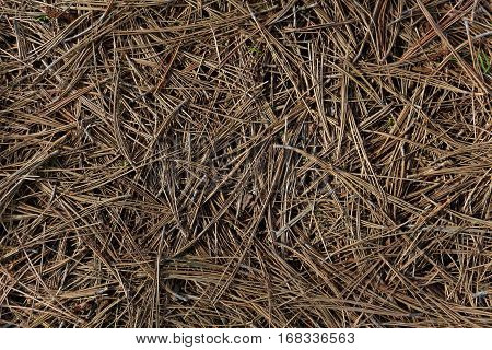Fallen pine needles covering ground, background, brown