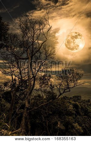 Silhouettes of trees against night sky with clouds and full moon over tranquil nature. Landscape in the evening at national park. Beauty of nature with sepia tone. The moon were NOT furnished by NASA.