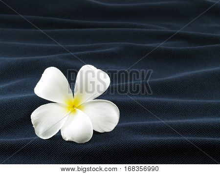 white flower on wave of dark blue fabric, like flower that fall into the water