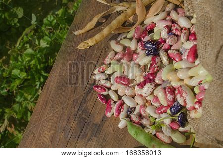 Lima Beans In Burlap Bag