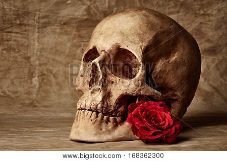 Vintage background with skull and red rose