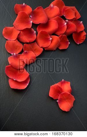 Valentine's card. Red petals on slate black background and copy space for yor text.