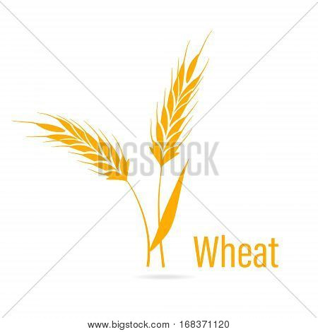 Gluten free icon. Ears of Wheat, Vector Illustration, Icon of Premium Quality Farm Product. Agricultural symbols isolated on white background. Design elements for bread packaging or beer label.