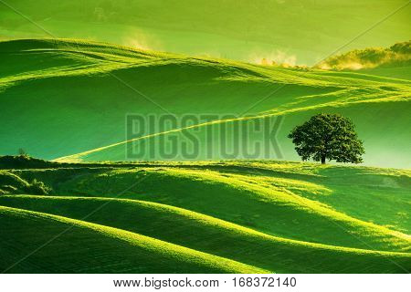 Waves Hills, Lonely Tree, Minimalistic Landscape