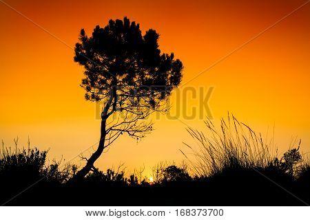 Silhouette tree sunset in Zakynthos island Greece
