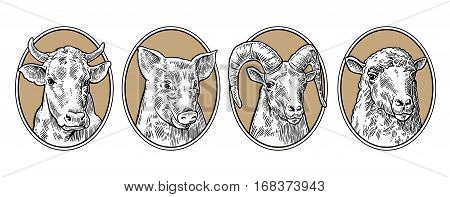 Farm animals set. Pig cow sheep and goat heads isolated on brown background. Vector black vintage engraving illustration for menu web and label. Hand drawn in a graphic style.