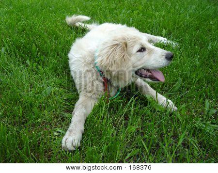 Dog 1