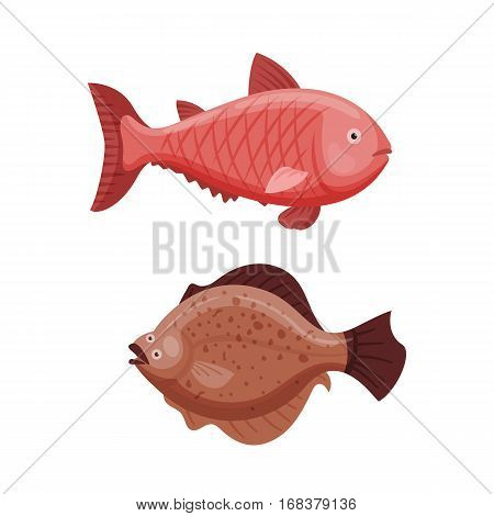 Grouper and cod fish vector illustration. Seafood animal aquatic restaurant biology scuba. Fresh marine nature reef fishing tail fin. Tropical wildlife scale.