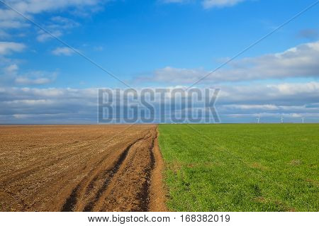 Green grass on edge of ploughed field. environmental concept