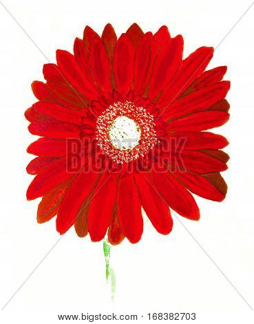 Red gerbera flower on whie background watercolor painting.