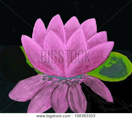 Pink waterlily on black background oil painting.