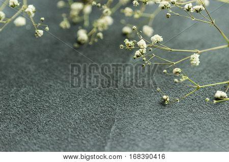 Dried flowers gybsophila on grey background in kinfolk style. Selective focus.