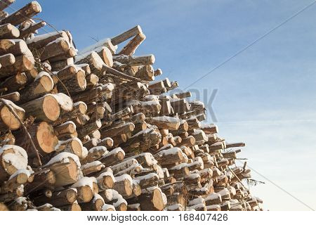 A large number of logs, stacked wood in the winter. The angle of the blue sky.